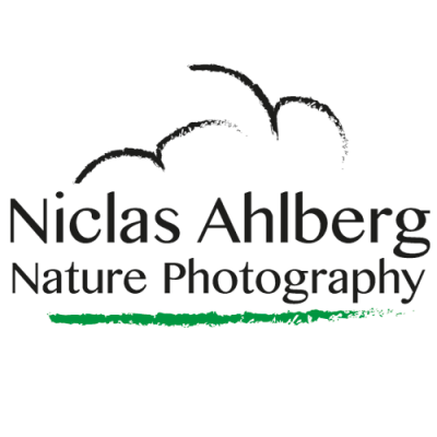Niclas Ahlberg Nature Photography