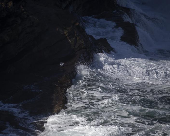 Klipphopparpingvin