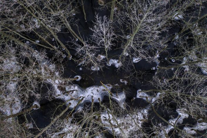 Sumpskog Värmdö